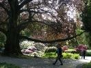 Arboretum_1